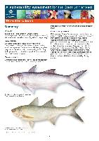 gbrmpa-VA-ThreadfinSalmon-11-7-12.pdf.jpg