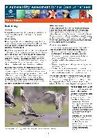 gbrmpa-VA-Shorebirds-11-7-12.pdf.jpg