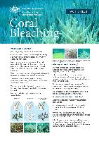 Coral-Bleaching-Fact-Sheet.pdf.jpg