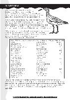 shorebirds.pdf.jpg
